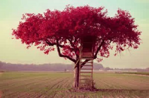 beautiful-dream-loooveee-nature-tree-housem.com-75000_large